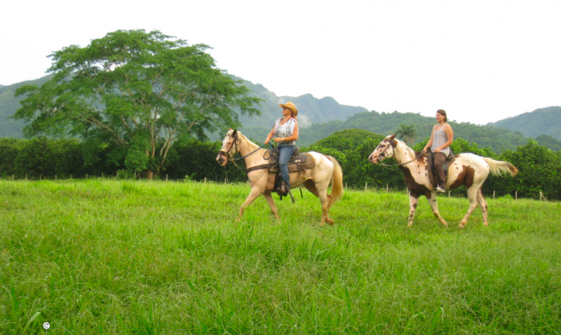 Horse Riding in Belize with Inspirit